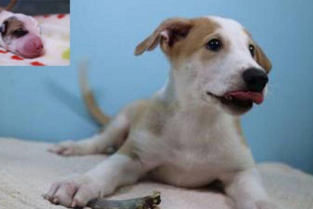 Se les murió su mascota y ahora tienen el primer perro clonado de Argentina
