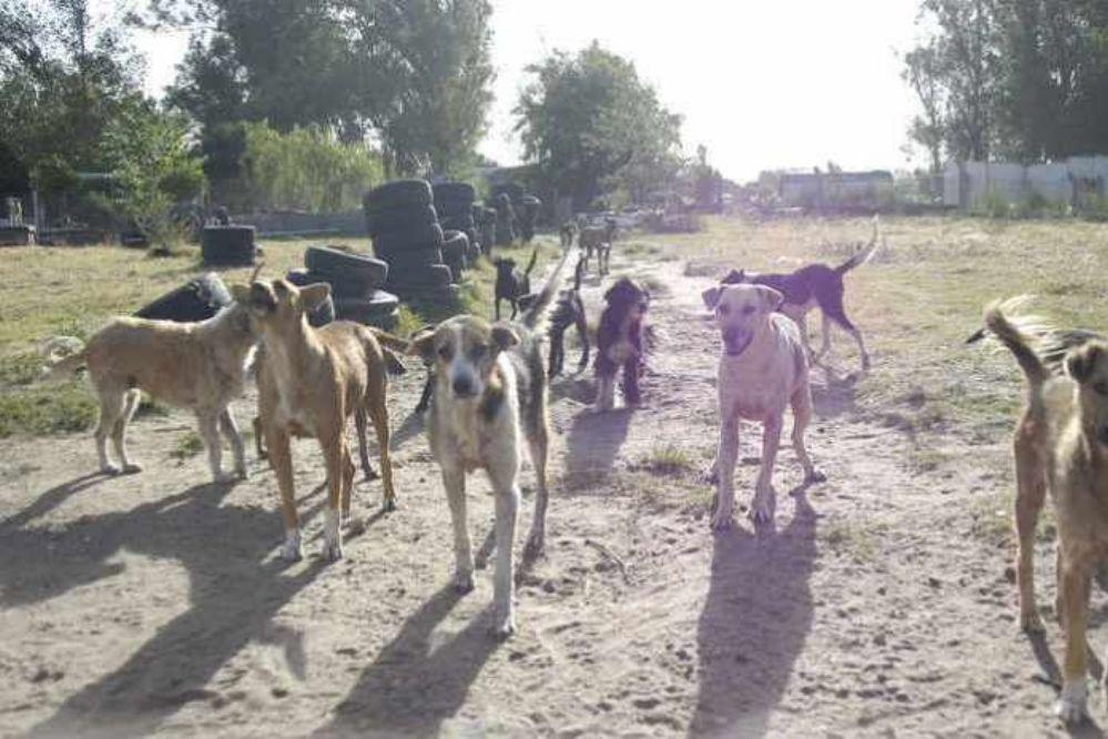 Aparecieron perros envenenados en Realicó