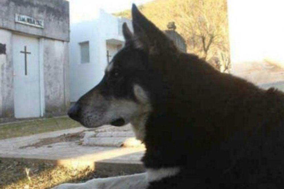 CONMOVEDOR: Un perro cumplió 10 años de guardia junto a la tumba de su dueño