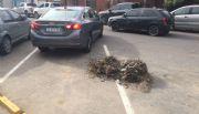"""FOTO DEL DÍA: Tanto estacionamiento que sobra, """"Sentido común, muchachos""""-Mira"""