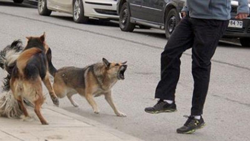 Resultado de imagen para imagenes ataque de perros